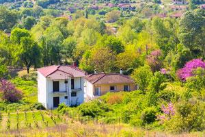 rural Greek landscape with vineyards